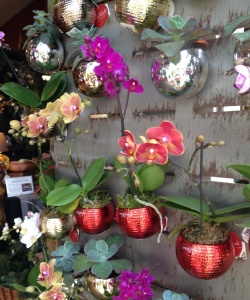 orchidmagnets