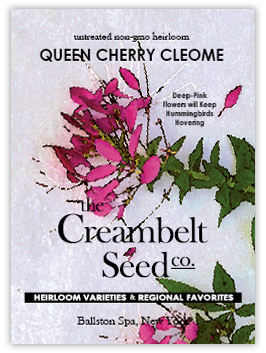 creambeltcleome