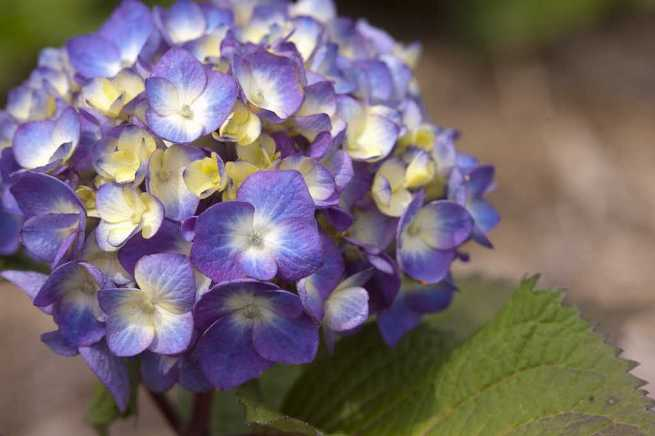 bloomstruck2