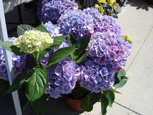 bloomstruckmorgue