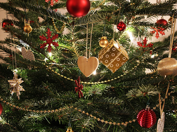 Christmas Tree Rules! 5 Things to Know