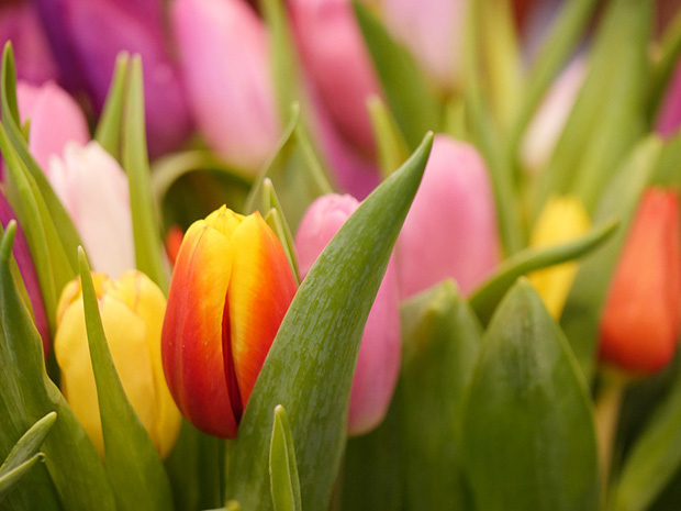 Planting Fall Bulbs – 6 Fast Tips