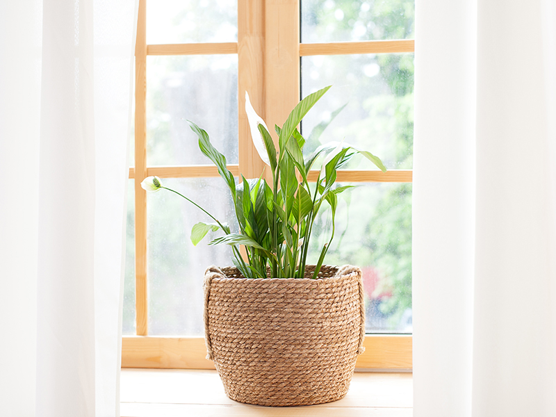 Starting Your Houseplant Journey