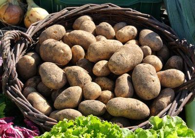 Potatoes Grown in a Bag- It's Easy