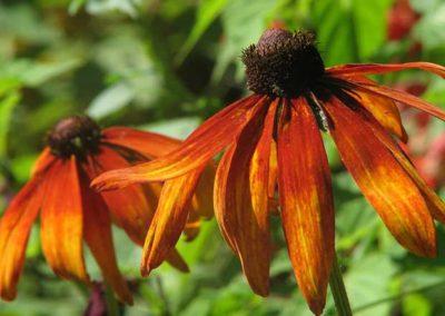 September Garden Tips