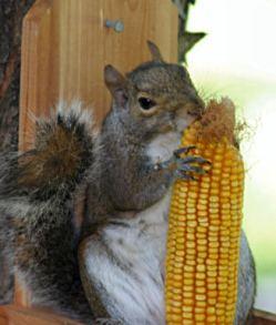 squirrelappreciation