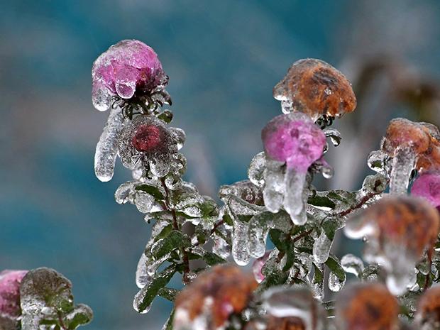 Winterizing Plants